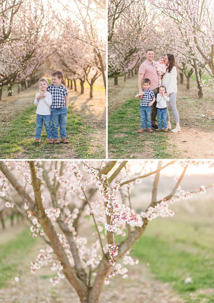 cherry blossom family session